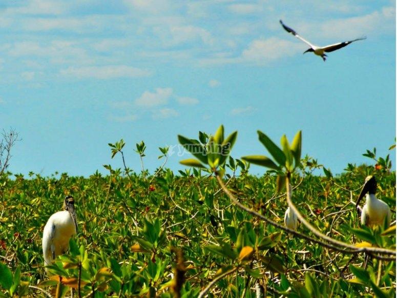Birds that lived in Sian Ka'an