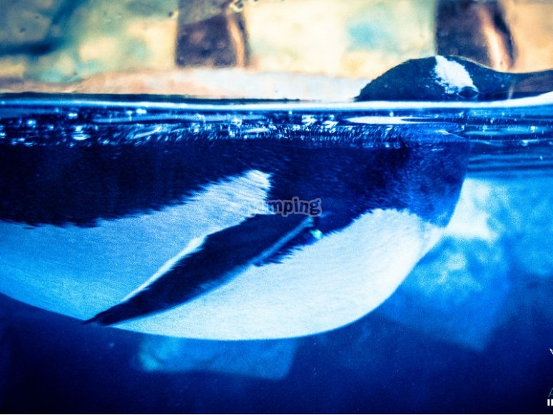 Beautiful penguin