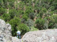 Rappel in the forest