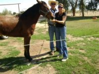 Our ranch horses