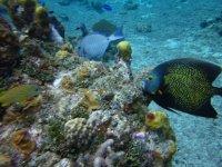 Snorkeling in reefs