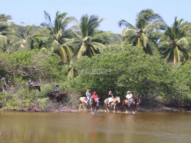 Guided tour with horses