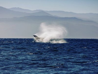 TB Tours Whale Watching