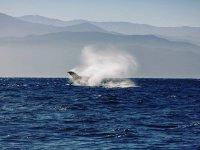 Ven y disfruta nuestros tours de avistamiento de ballenas