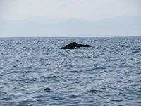 Descubre la magia de la naturaleza con nuestro tour de avistamiento de ballenas
