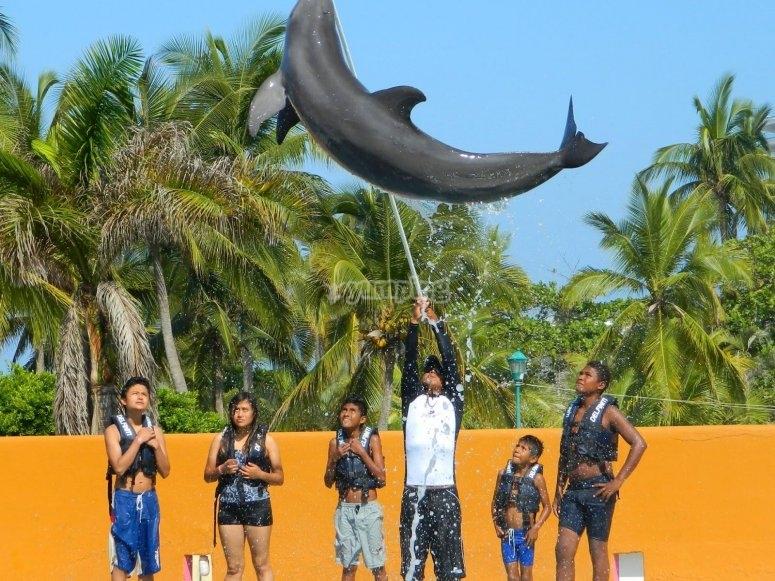Dolphin stunts