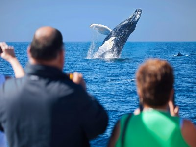 Whale encounter in Los Cabos with breakfast