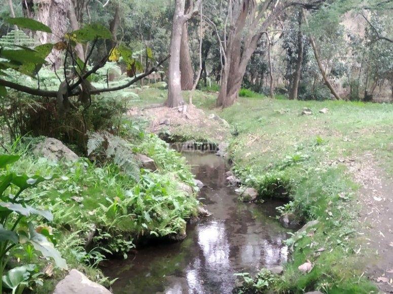 Get to know the La Ciénega spring