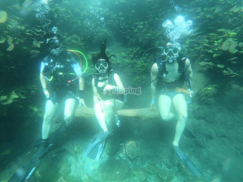 Diving fans