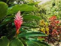 Botanical Garden and Magdalena River Tour in Huatulco