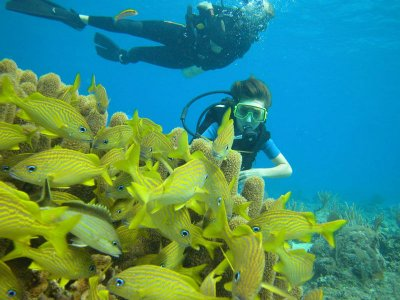 Diving tour with 3 dives in Cozumel 4 hours