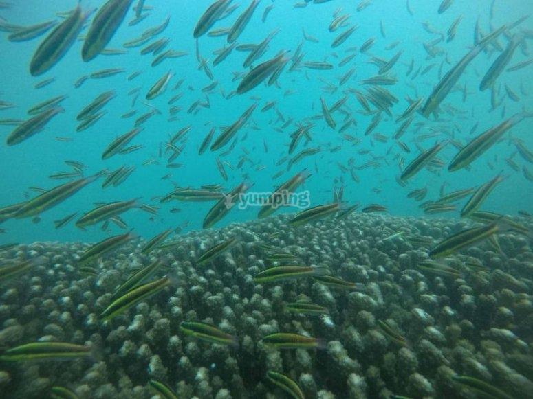 Marine world in Zihuatanejo