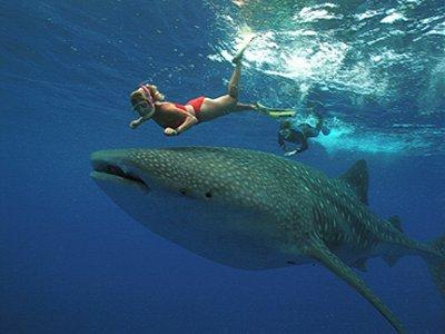 Destino Isla Adventures Snorkel