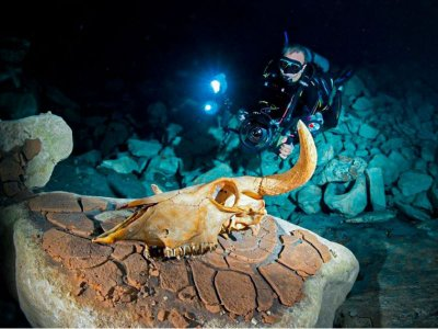 Night diving adventure in Ixtapa Zihuatanejo