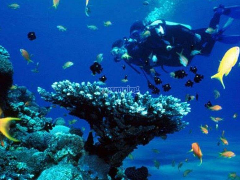 Flora and marine fauna of Zihuatanejo