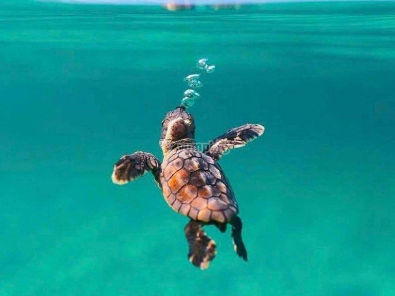 Beauties of the marine world