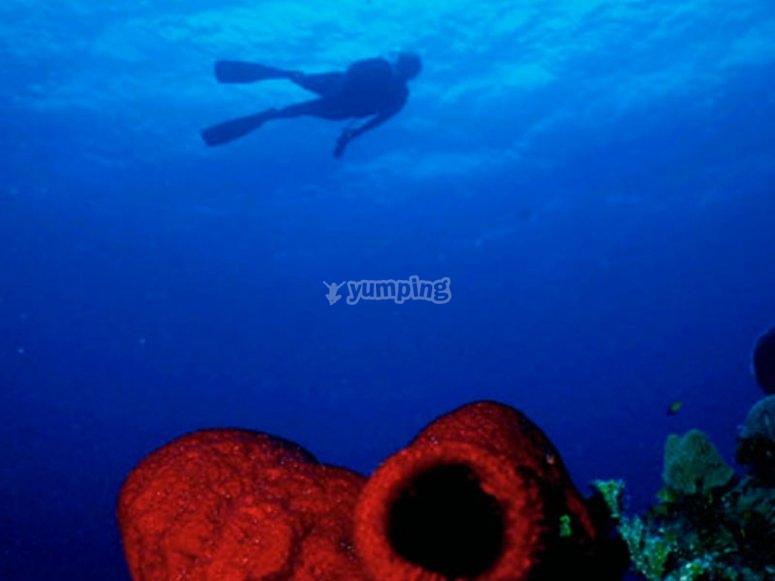 Diving in the Pacific Ocean