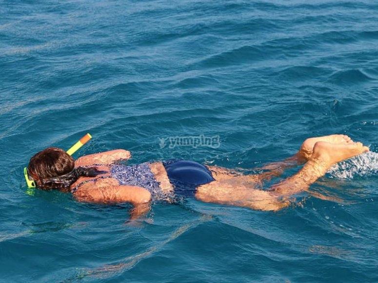 Snorkel para nadar con los tiburones ballena