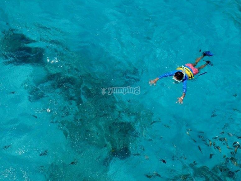 Snorkel para ver a los tiburones balleba bajo el agua
