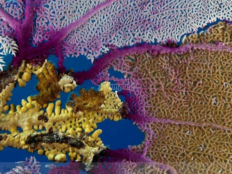 Multi colored corals