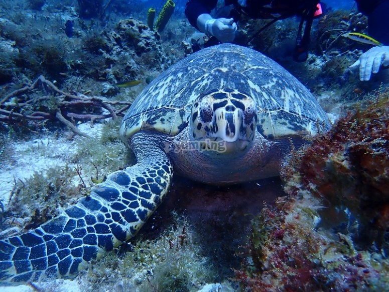 Discover the marine fauna in Cozumel