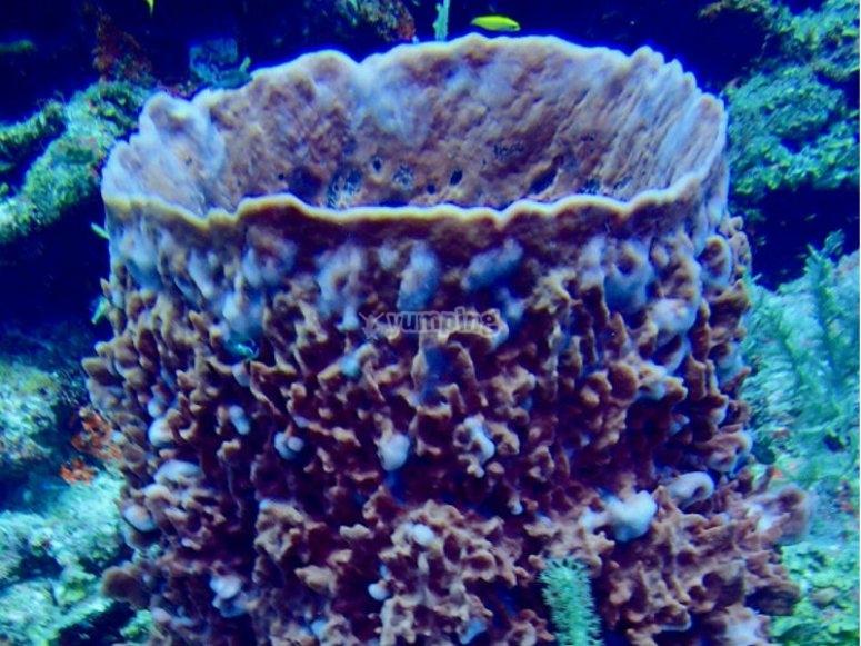 Impressive sponge
