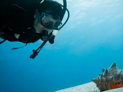 Diving 4 immersions with stay in Cozumel 6 days