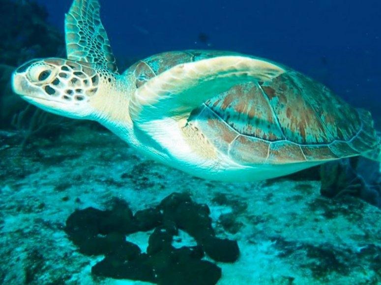 Marine fauna in Cozumel