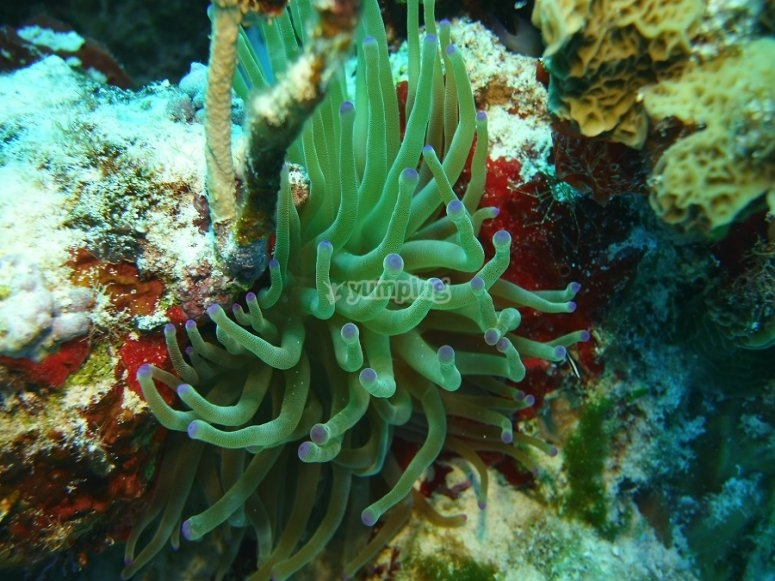 Be amazed by this beautiful anemone