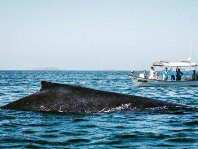 Avistamiento de Ballenas en Punta Mita 2.5 horas