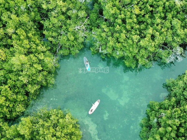 SUP in the mangroves of Cancun