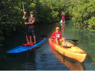 Cancun mangrove kayak tour 2 hours