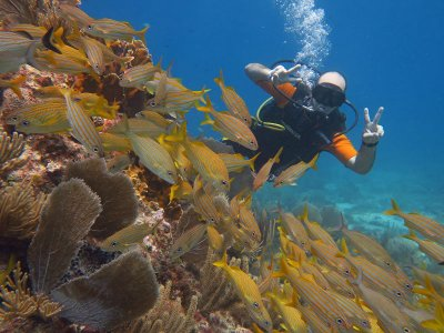 Diving in Puerto Morelos from Cancun 4.5 hours