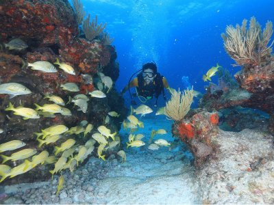 Diving in Cozumel from Cancun 8 hours