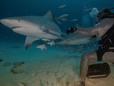 Bull Shark Diving Adventure in Cancun 8 hours