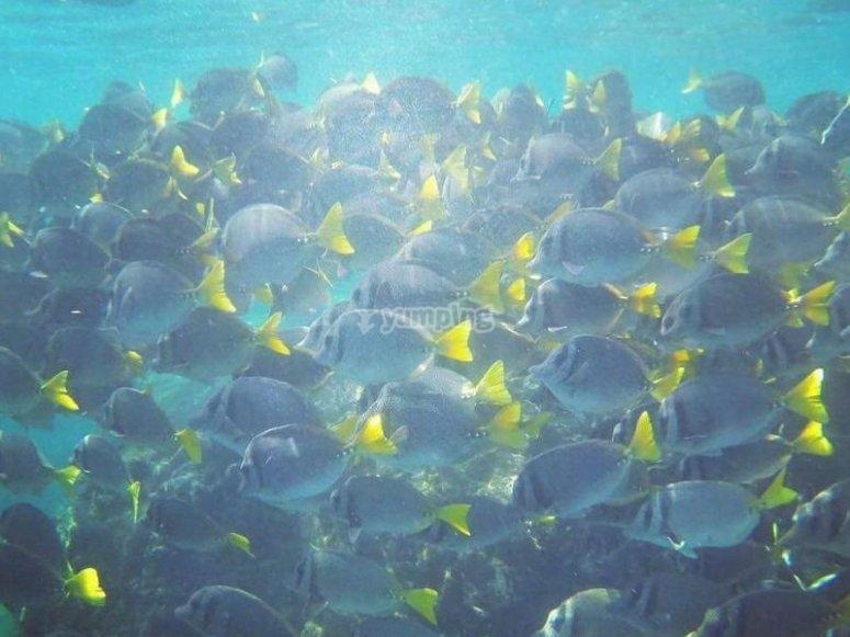Descubre hermosos paisajes marinos haciendo snorkel en las Islas Marietas