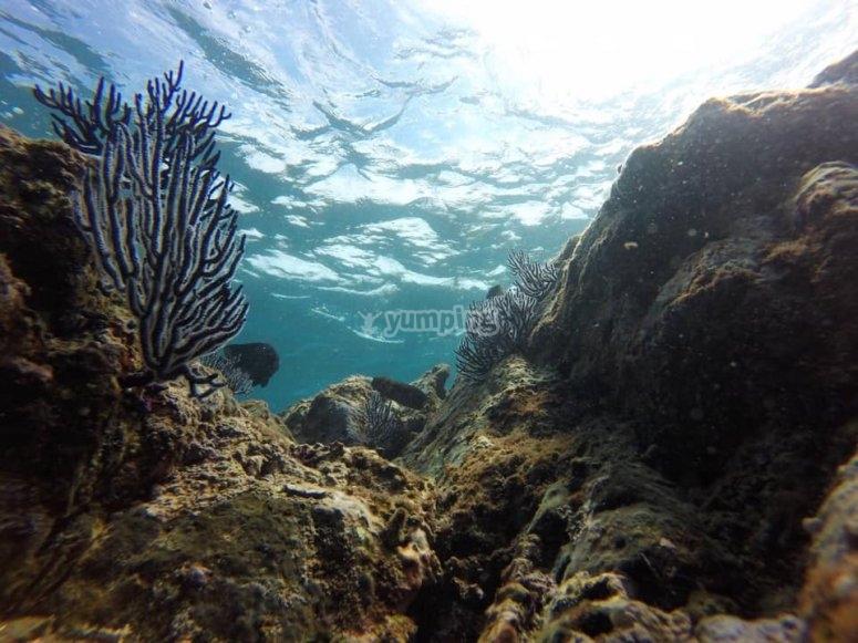 Mundo marino en Islas Marietas