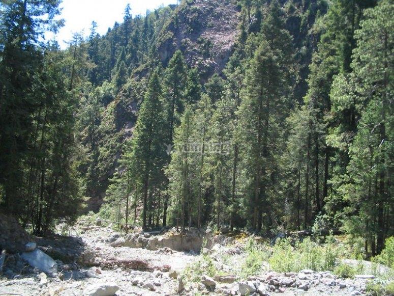Las Cañadas of La Malinche National Park