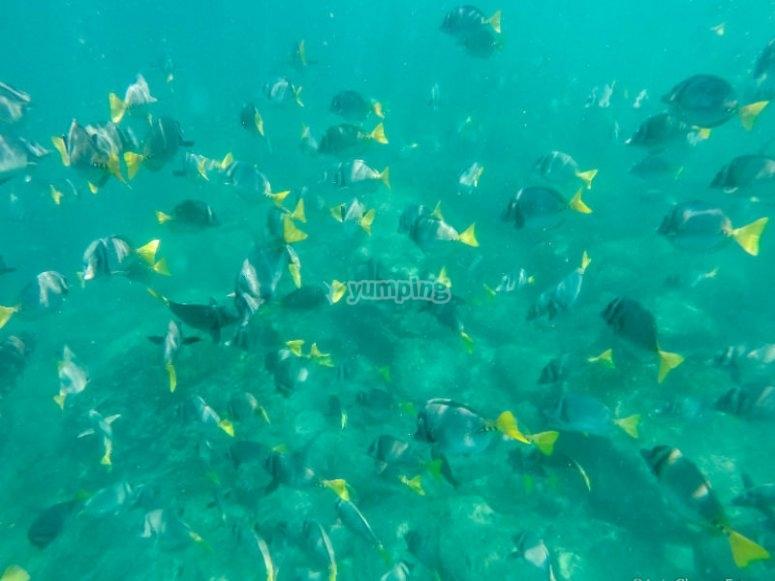 Banco de peces tropicales