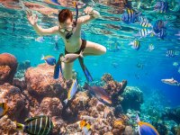 Marvel at a world of life and color under water