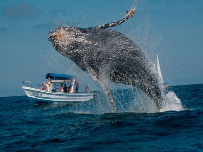 Villa Amor Whale Watching