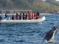Excursiones de avistamiento de ballenas