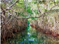 Spectacular mangroves in the lagoon