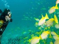 Maravillas submarinas