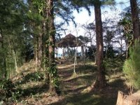 Reforested nature