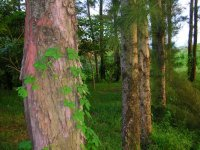 Reforestación exitosa