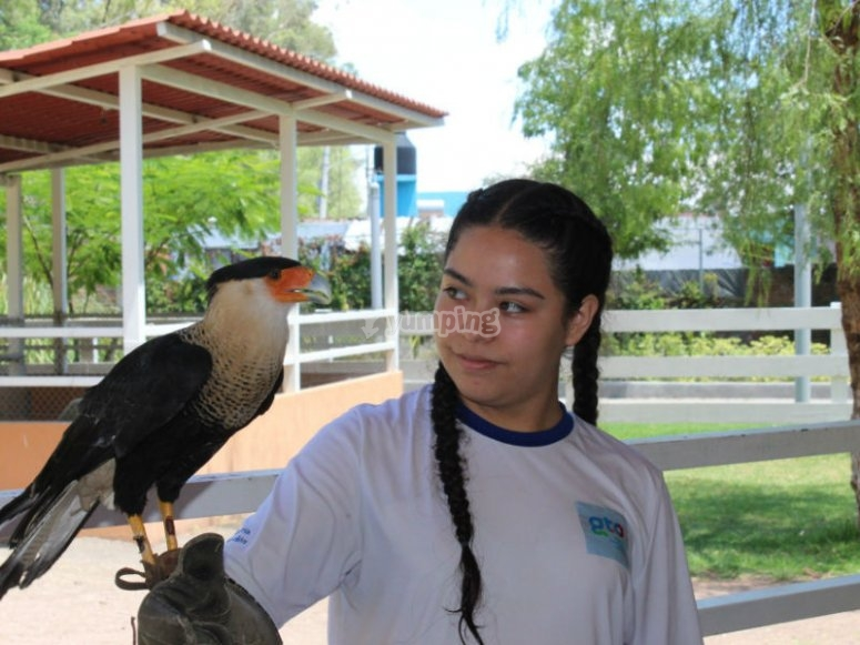 Meet and learn about different types of birds