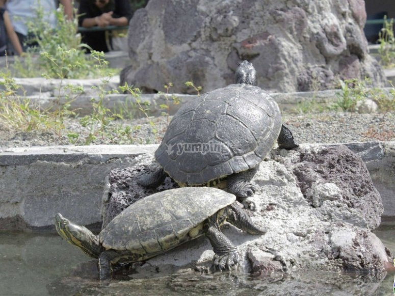 Discover the world of turtles