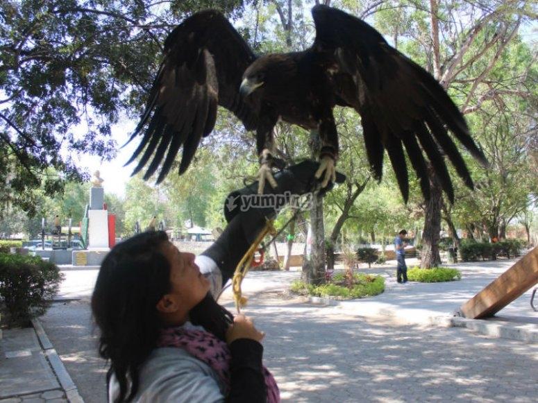 Impressive eagle