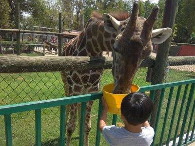 Acceso a zoológico precio niños en Irapuato 2 hrs